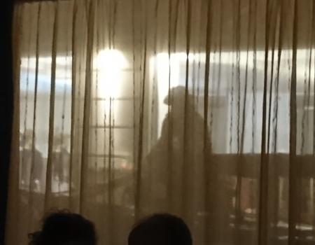 Beitrag über das Gutruf in Wien, hier Fiaker als Schatten- www.wien-erleben.com