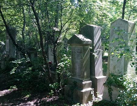 Beitrag über den St. Marxer Friedhof, verwilderte Gräber - www.wien-erleben.com