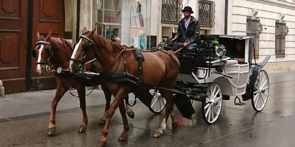 Fiaker in Wien mit weißer Kutsche - www.wien-erleben.com