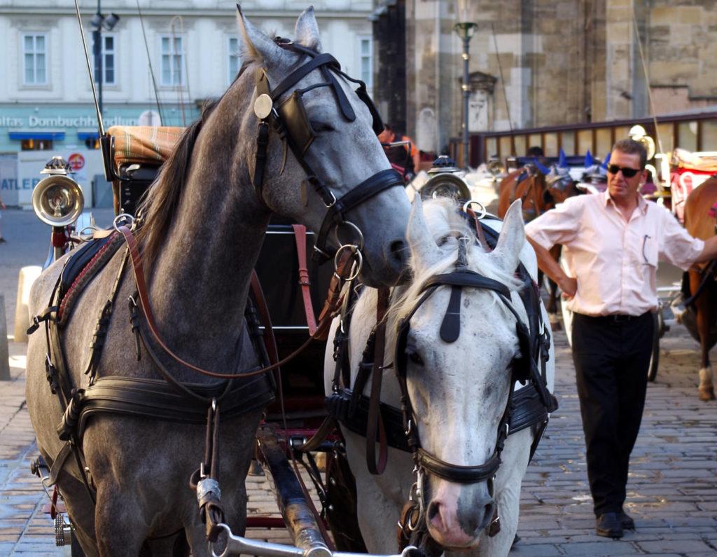 Wiener Fiakerpferde mit Kutscher - www.wien-erleben.com
